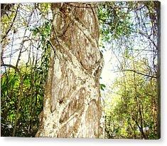 Tree Hugger 7 Acrylic Print by Van Ness