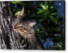 Acrylic Print featuring the photograph Tree Hugging Cat by Marjorie Imbeau