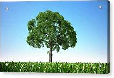 Tree In A Field, Artwork Acrylic Print by Leonello Calvetti