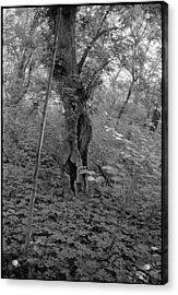 Tree In Elkins Park Acrylic Print by Julie VanDore