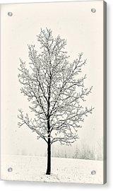 Tree In Heavy Snow Acrylic Print by Joseph Duba