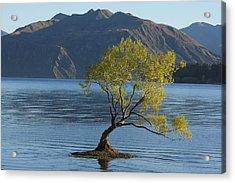 Tree In Lake Wanaka Acrylic Print by Stuart Litoff