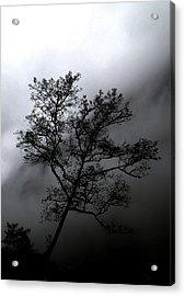 Tree In Mist Acrylic Print