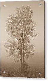 Tree In Morning Fog Acrylic Print by Eje Gustafsson