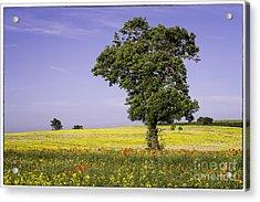 Tree In Rape Field No1 Acrylic Print by George Hodlin