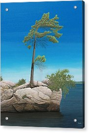 Tree In Rock Acrylic Print by Kenneth M  Kirsch
