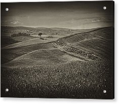 Acrylic Print featuring the photograph Tree In Sienna by Hugh Smith