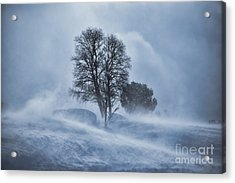 Tree In Snow Blizzard Acrylic Print