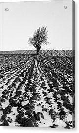 Tree In Snow Acrylic Print by John Farnan
