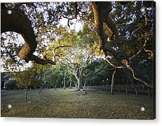 Tree In St. Augustine Park Acrylic Print