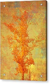Tree In Sunlight Acrylic Print by Suzanne Powers