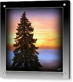 Acrylic Print featuring the photograph Tree In Sunrise by Michelle Frizzell-Thompson