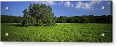 Tree In The Field, Everglades National Acrylic Print