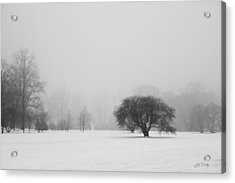 Acrylic Print featuring the photograph Tree In The Fog by Ed Cilley
