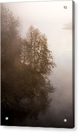 Tree In The Fog  Acrylic Print