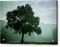 Tree In The Fog Acrylic Print by Wladimir Bulgar