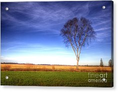 Tree In The Murnauer Moos Acrylic Print