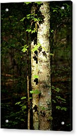 Tree In The Woods Acrylic Print