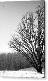 Tree In Winter 2 Acrylic Print
