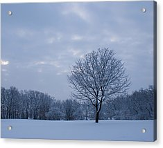 Tree In Winter Acrylic Print by Larry Bohlin