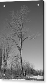 Tree In Winter Acrylic Print