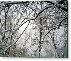 Tree Lace Too Acrylic Print by Desline Vitto