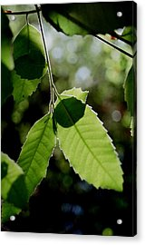 Tree Leaves Acrylic Print by Alfredo Martinez
