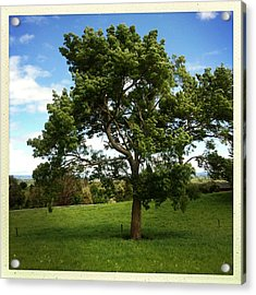 Tree Acrylic Print by Les Cunliffe