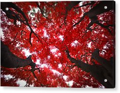 Acrylic Print featuring the photograph Tree Light - Maple Leaves Fall Autumn Red by Jon Holiday