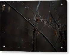 Tree Limb With Rain Drops 2 Acrylic Print