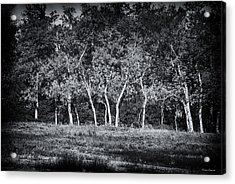 Tree Line In Autumn  Acrylic Print