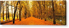 Tree-lined Road Loire Chenonceaux France Acrylic Print