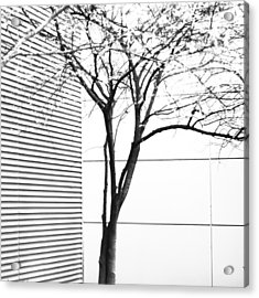 Acrylic Print featuring the photograph Tree Lines by Darryl Dalton