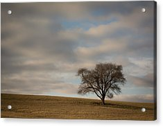 Tree Acrylic Print by Lisa Plymell