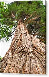 Tree Mass Acrylic Print by Marion Johnson