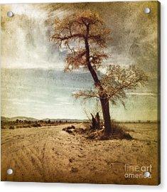 Tree Near The Road Acrylic Print by Pam Vick