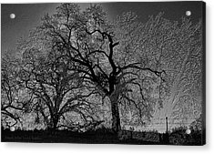 Acrylic Print featuring the digital art Tree Night II by Visual Artist Frank Bonilla