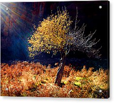 Tree Number 1 Acrylic Print by Peter Cutler