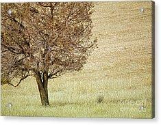 Tree Acrylic Print by Nur Roy