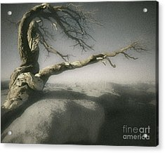 Tree Of Ages Acrylic Print