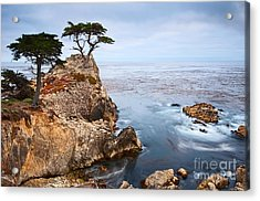 Tree Of Dreams - Lone Cypress Tree At Pebble Beach In Monterey California Acrylic Print by Jamie Pham