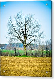 Tree Of Life Acrylic Print by BandC  Photography