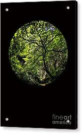 Tree Of Life II Acrylic Print by Holly Martin