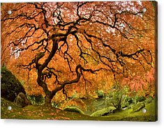 Tree Of Life Acrylic Print by Lori Grimmett