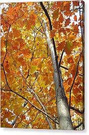 Tree Of Orange Acrylic Print by Guy Ricketts