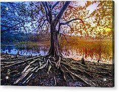 Tree Of Souls Acrylic Print by Debra and Dave Vanderlaan