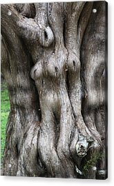 Tree Of Souls Acrylic Print