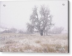 Tree Of Storm Acrylic Print by Kristal Kraft