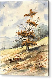 Tree On A Hillside Acrylic Print by Sam Sidders