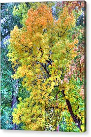 Acrylic Print featuring the photograph Tree On Fountain Creek by Lanita Williams